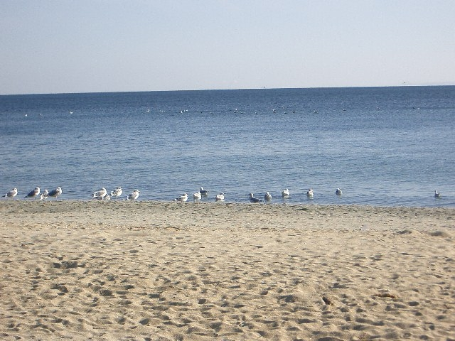 海岸散歩デート